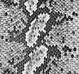 Balboa - Black & White