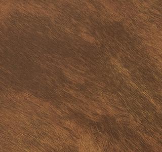 Cheval - Buffalo