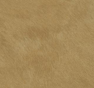 Cheval - Camel