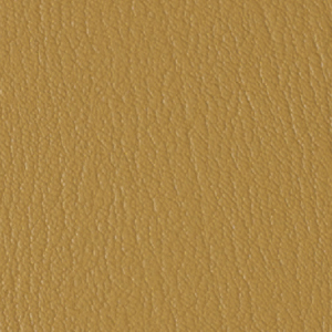 Colorguard- Camelback