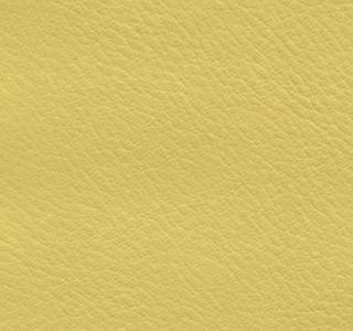 Verve - Daffodil