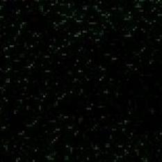 Spirit Millennium - Yew Green